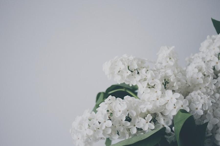 perfumes con flores blancas